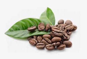 En sus suelos fértiles y bajo un clima nublado y lluvioso crecen variedades  arábicas como catuay 66e71298c087