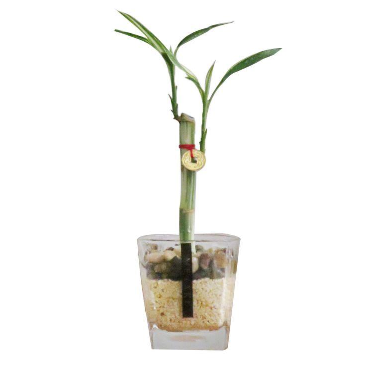 Bamboo-1-169141