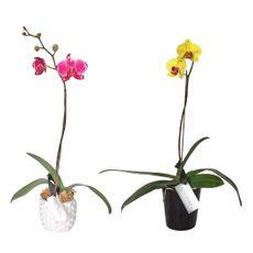 Orquideas-1-33242384