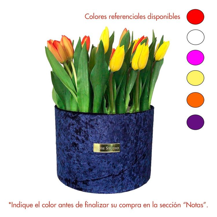 Rose-Studio-Deluxe-Box-de-38-Tulipanes-Tulip-Blue-1-30051740