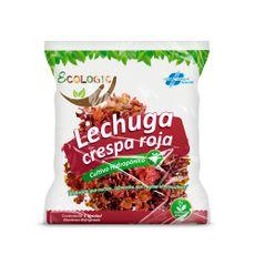 Lechuga-Roja-Hidroponica-de-Invernadero-Ecologic-x-Unid-1-44544266
